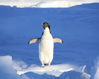 pingouin en smoking
